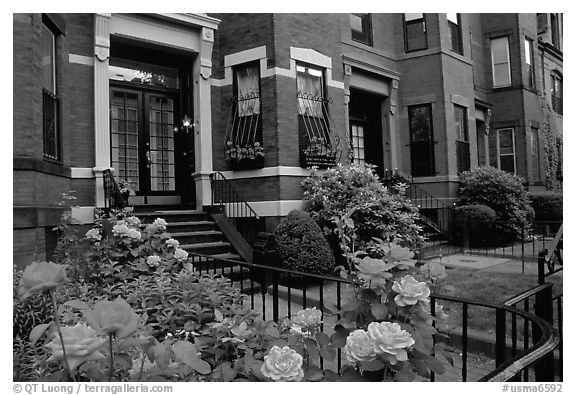 Roses and brick houses on Beacon Hill. Boston, Massachussets, USA (black and white)