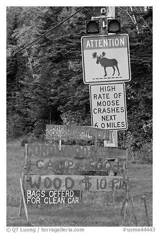 Moose warning a wood for sale signs. Maine, USA (black and white)