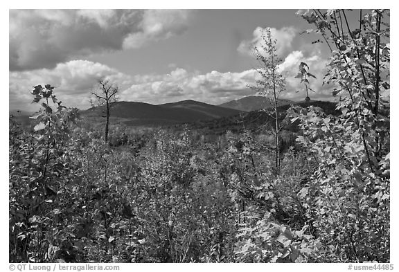 Autumn landscape with colorful leaves and distant mountains. Maine, USA (black and white)