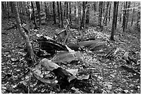 B-52 wreck scattered in autum forest. Maine, USA ( black and white)