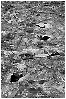 Close-up of aicraft wreck with fallen leaves. Maine, USA ( black and white)