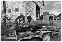 Hunters preparing to weight killed moose, Kokadjo. Maine, USA (black and white)