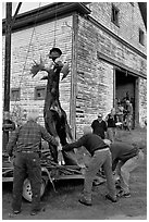 Hunters lifting dead moose for weighting, Kokadjo. Maine, USA (black and white)