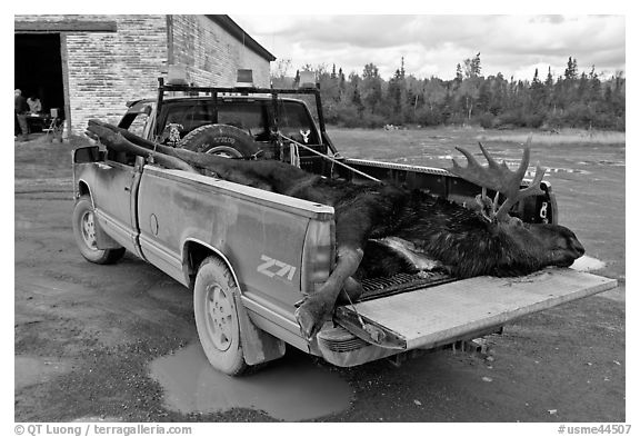 Truck with harvested moose, Kokadjo. Maine, USA (black and white)