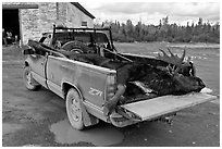 Truck with harvested moose, Kokadjo. Maine, USA ( black and white)