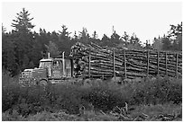 Truck loaded with tree logs. Maine, USA ( black and white)