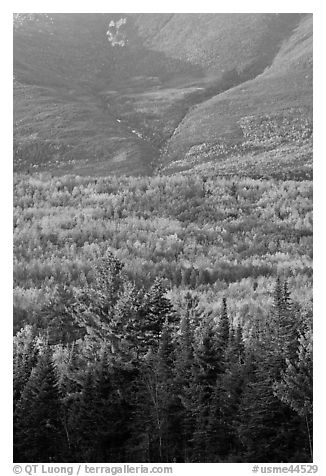 Forested slopes of Mount Katahdin. Baxter State Park, Maine, USA (black and white)