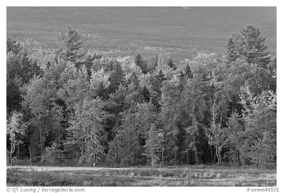 Trees in fall foliage and Katahdin slopes. Maine, USA (black and white)