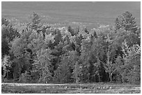Trees in fall foliage and Katahdin slopes. Maine, USA ( black and white)