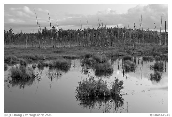 Pond and trees at dusk, Golden Road. Maine, USA (black and white)