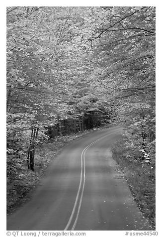 Road near entrance of Baxter State Park, autumn. Baxter State Park, Maine, USA (black and white)
