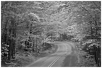 Fall foliage and road near entrance of Baxter State Park. Baxter State Park, Maine, USA ( black and white)