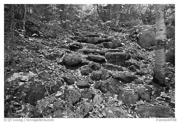 Trail ascending in forest over stones. Baxter State Park, Maine, USA (black and white)