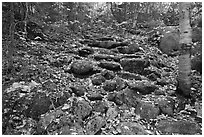 Trail ascending in forest over stones. Baxter State Park, Maine, USA ( black and white)
