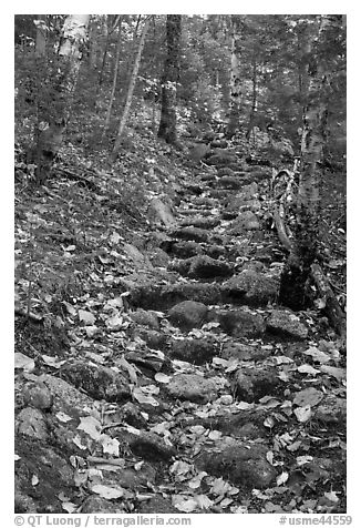 Steep trail paved irregularly with stones. Baxter State Park, Maine, USA (black and white)