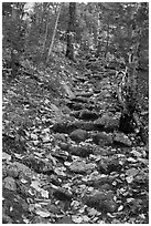 Steep trail paved irregularly with stones. Baxter State Park, Maine, USA ( black and white)