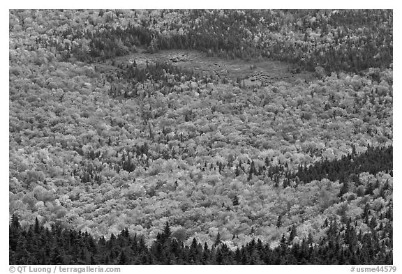 Mixed forest, meadow and pond seen from above. Baxter State Park, Maine, USA (black and white)