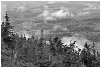 Ridge of conifers, with mixed forest and clouds below. Baxter State Park, Maine, USA ( black and white)