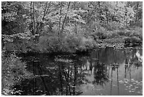 Pond surrounded by trees in fall colors. Maine, USA ( black and white)