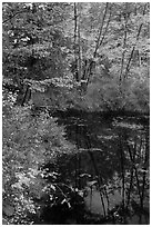 Trees in fall foliage next to pond. Maine, USA ( black and white)