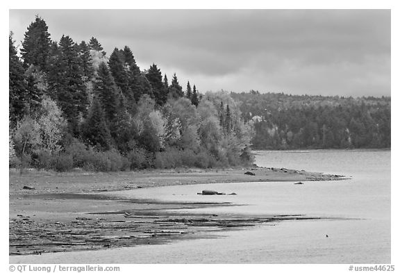 Trees in autumn color on shores of Chamberlain Lake. Allagash Wilderness Waterway, Maine, USA (black and white)