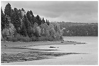 Trees in autumn color on shores of Chamberlain Lake. Allagash Wilderness Waterway, Maine, USA ( black and white)