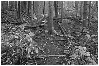 Tree growing in middle of abandonned railroad track. Allagash Wilderness Waterway, Maine, USA (black and white)