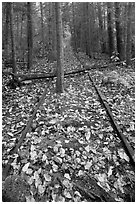 Abandonned railway tracks. Allagash Wilderness Waterway, Maine, USA ( black and white)