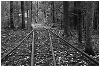 Forest with railroad tracks from bygone logging area. Allagash Wilderness Waterway, Maine, USA ( black and white)