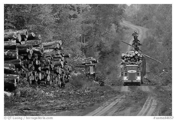 Log truck loaded on forestry road. Maine, USA (black and white)