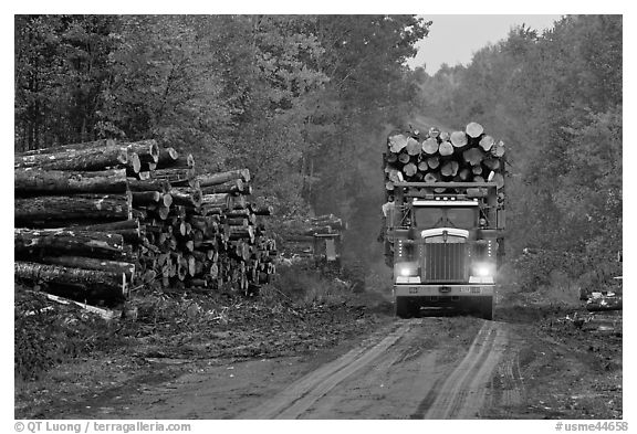 Log truck drives by pile of tree trunks. Maine, USA