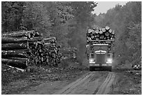 Log truck drives by pile of tree trunks. Maine, USA (black and white)
