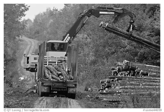 Log loader lifts trunks into log truck. Maine, USA (black and white)