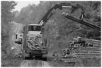 Log loader lifts trunks into log truck. Maine, USA ( black and white)