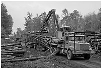 Logging operation loading tree trunks onto truck. Maine, USA (black and white)