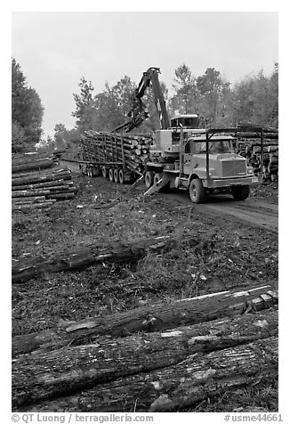 Forestry site with working log truck and log loader. Maine, USA (black and white)