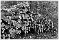 Stacked logs. Maine, USA (black and white)