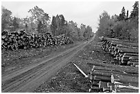 Forestry road with logs on both sides. Maine, USA ( black and white)