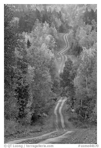 Meandering forestry road in autumn. Maine, USA (black and white)