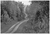 North Woods in autumn with twisting unimproved road. Maine, USA (black and white)