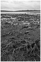 Dead trees and grasses on shores of Round Pond. Allagash Wilderness Waterway, Maine, USA ( black and white)