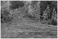 Clear cut gully in forest. Maine, USA ( black and white)