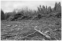 Deforested landscape in the fall. Maine, USA (black and white)