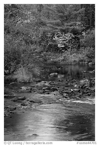 Stream and autumn reflections. Maine, USA (black and white)