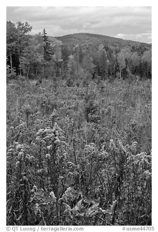 Clearing, forest in fall foliage, and hill. Maine, USA (black and white)