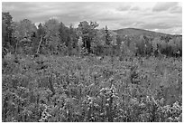 Clearing and forest in autumn. Maine, USA (black and white)