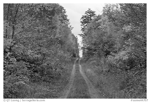 Grassy road in autumn. Maine, USA (black and white)