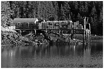 Pier loaded with lobster traps. Isle Au Haut, Maine, USA (black and white)