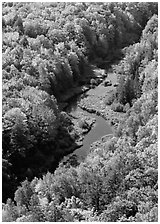 River and trees in autumn colors, Porcupine Mountains State Park. Upper Michigan Peninsula, USA ( black and white)