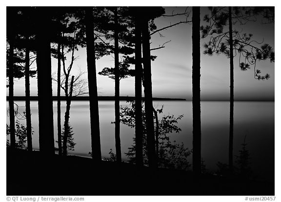 Trees and sunset, Lake Superior. USA (black and white)